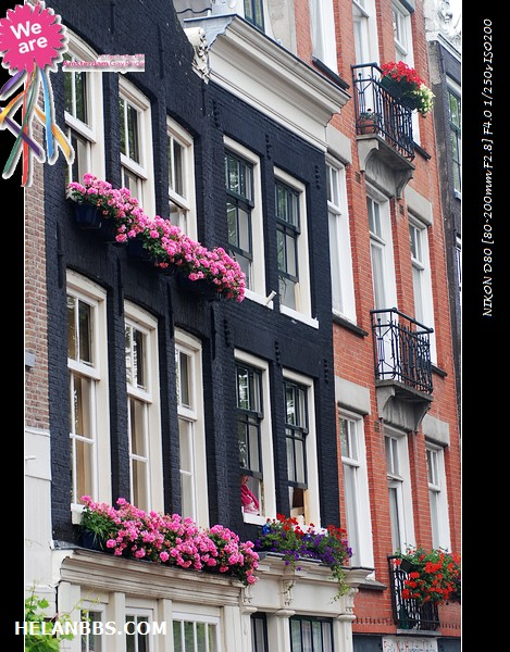 2011年阿姆斯特丹同性恋大游行狂欢活动 Gay Pride (13)
